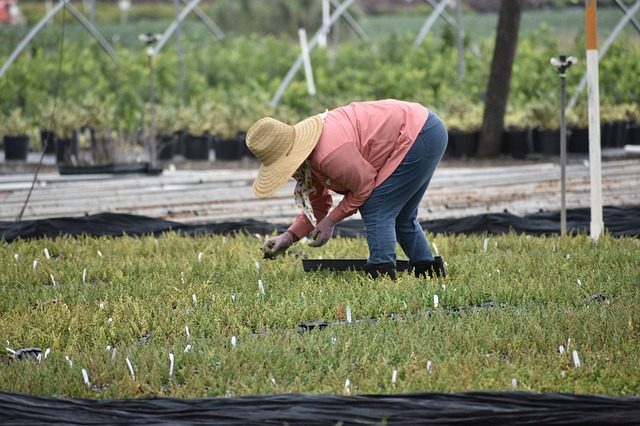 Woman wearing hat working in plant nursery in a bent over position