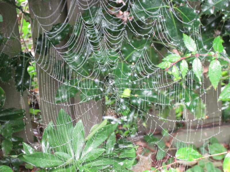 Spider web September 2020