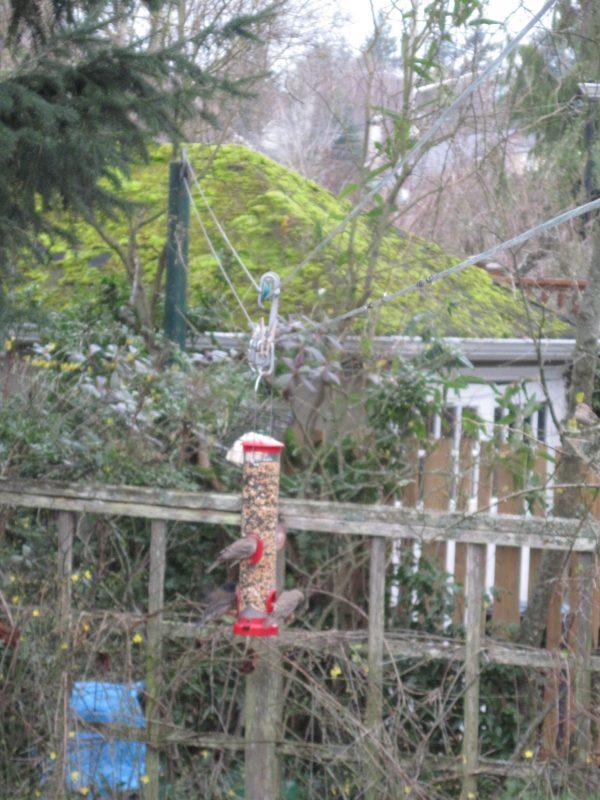 Bird feeder on clothesline