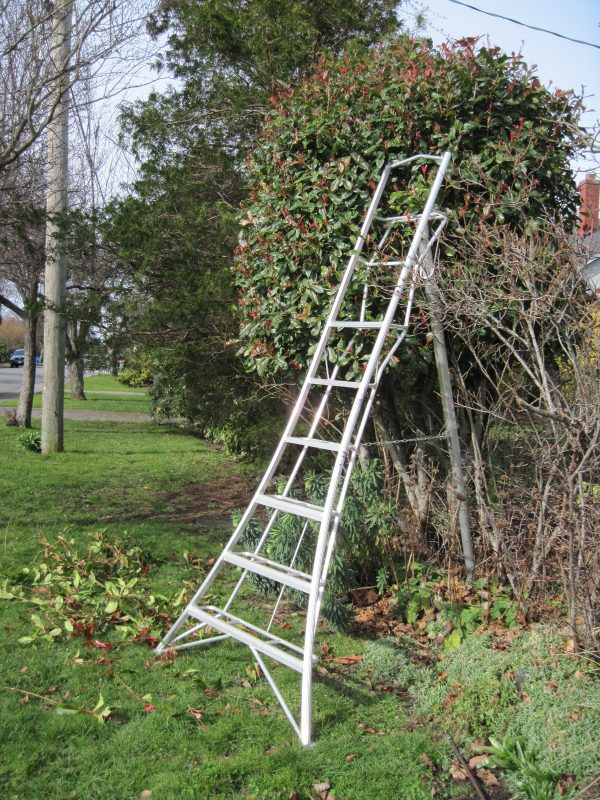 Three-legged ladder and Photinia