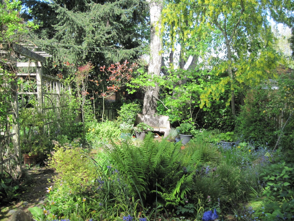 Back garden, looking west to pond bench