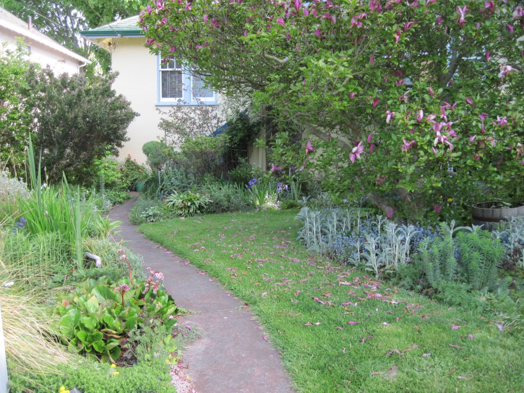 Front walk, perennial bed, lawn, and magnolia