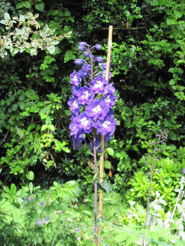 Blue delphinium with white bee